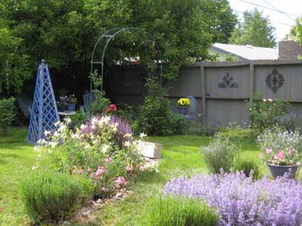 Garden June 8 new gaura sm.jpg