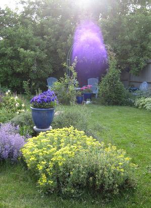 Happy Place purple light nlgcr.jpg