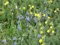 IMG_tundraflowersred.jpg