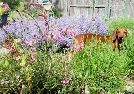 Lilah gaura crop sm2.jpg