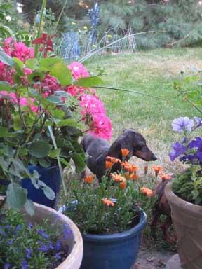 Roly behind pots smr.jpg