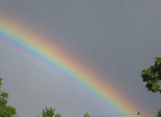 Rainbow bird on wire crop sm.jpg