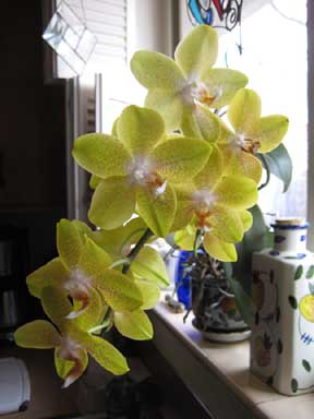 birthday orchid in 09 sm.jpg