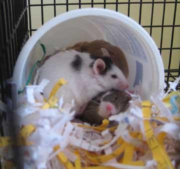 carton of mice sm.jpg