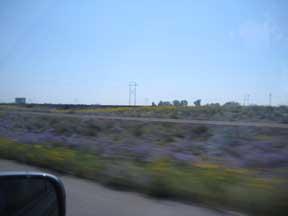 wildflowers I-70 2.jpg